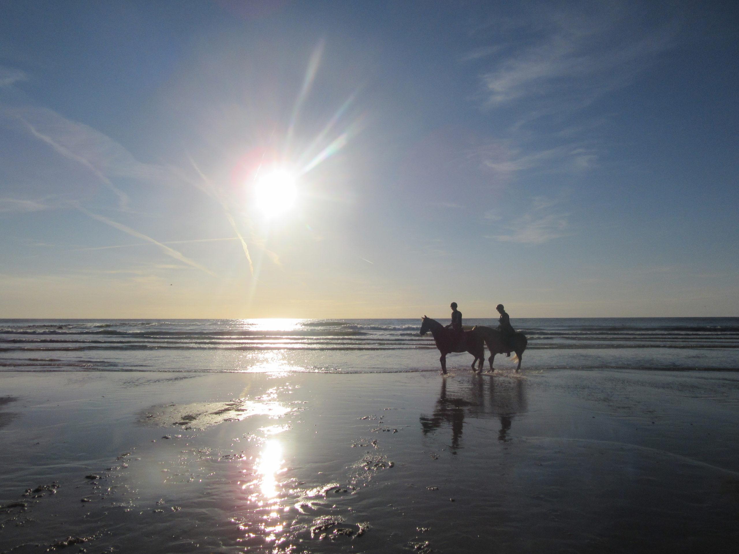 stamceltherpaie paard